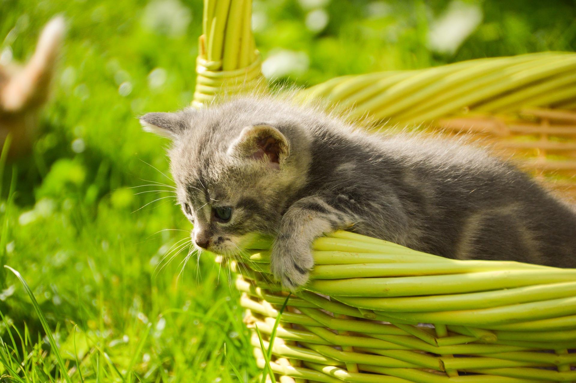 szkolenie kota